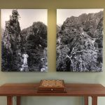Wall labels for museum exhibits. Picture from inside The Arnold Arboretum at Harvard University.